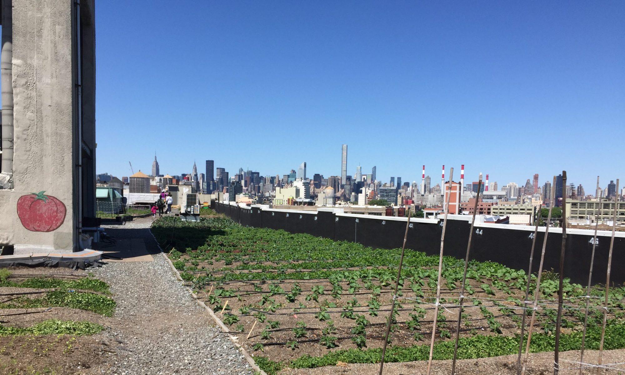 Salford Care and Urban Farm Hub