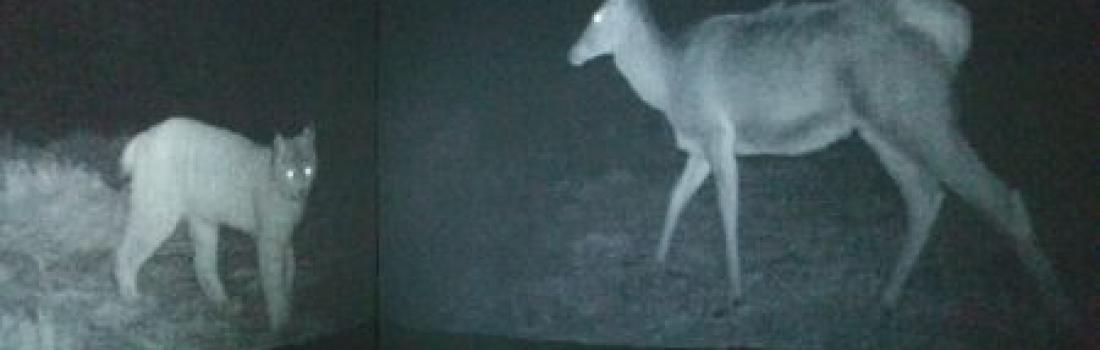 Chernobyl wildlife project shortlisted for prestigious award