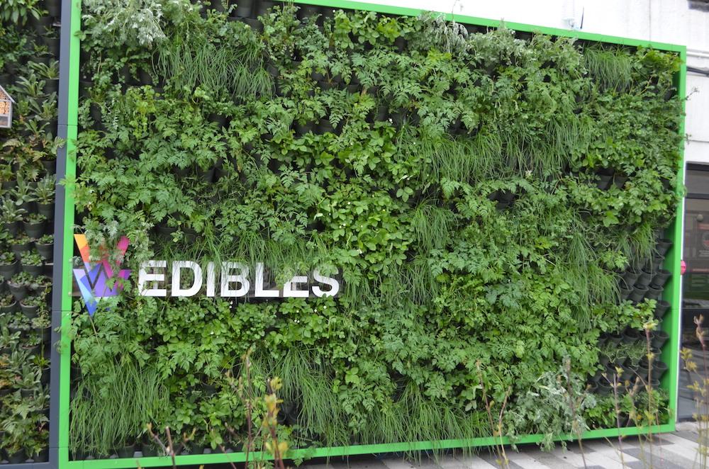 Edible green wall at the University of Salford